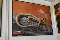 Ukázka z výstavy Natura Viva 2015